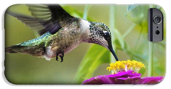 Sweet Success Hummingbird Square IPhone 6 Case