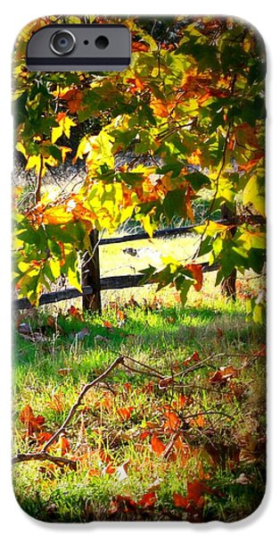 Beautiful Autumn Day iPhone Cases - Sycamore Grove Fence 2 iPhone Case by Carol Groenen