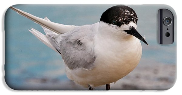 IPhone 6 Case featuring the photograph Tern 1 by Werner Padarin