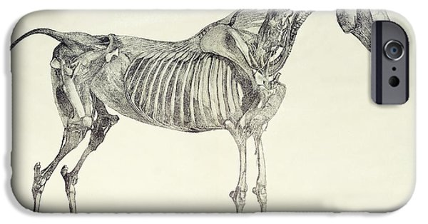 Animal Drawings iPhone Cases - The Anatomy of the Horse iPhone Case by George Stubbs