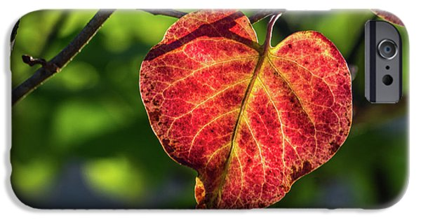 IPhone 6 Case featuring the photograph The Autumn Heart by Bill Pevlor