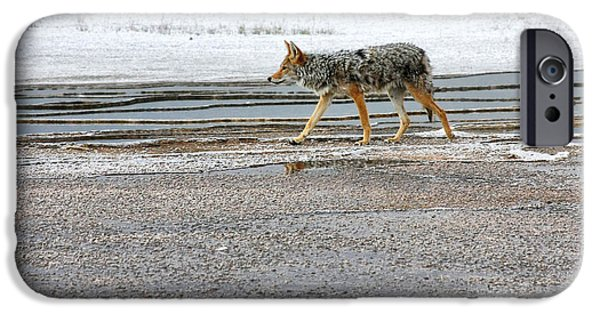 Coyote Art iPhone Cases - The Coyote - Dogs are by far more dangerous iPhone Case by Christine Till