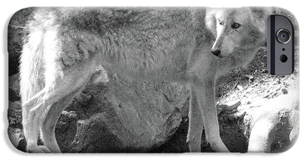 Arctic Wolf Mixed Media iPhone Cases - The Gray Wolf iPhone Case by Debra     Vatalaro