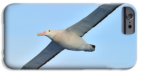 Albatross iPhone Cases - The Greatest Seabird iPhone Case by Tony Beck