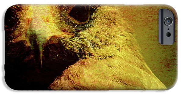 Red Tail Hawk Digital Art iPhone Cases - The Hunter . Portrait of a Hawk . Square . 40D7877 iPhone Case by Wingsdomain Art and Photography