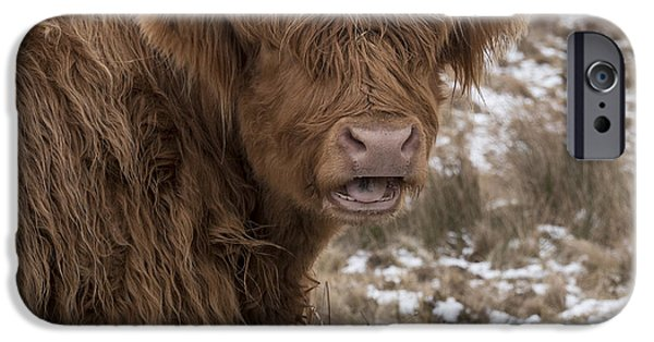 The Laughing Cow, Scottish Version IPhone 6 Case