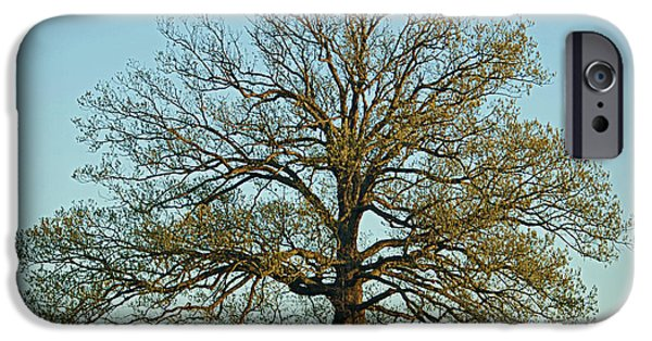 Mighty Oak iPhone Cases - The Mighty Oak in Spring iPhone Case by Cricket Hackmann