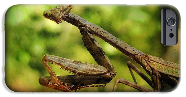 Mantises iPhone Cases - The Observer iPhone Case by Amy Tyler