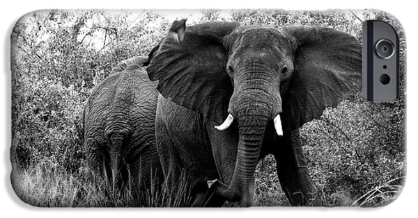 Elephants iPhone Cases - The Standoff iPhone Case by Bruce J Robinson