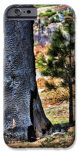 Pines iPhone Cases - Then and Now iPhone Case by Bonnie Bruno