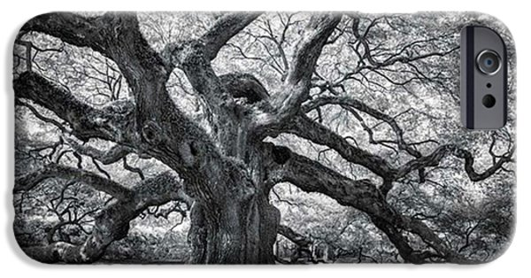 iPhone 6 Case - This Tree Is Located In Charleston by Jon Glaser