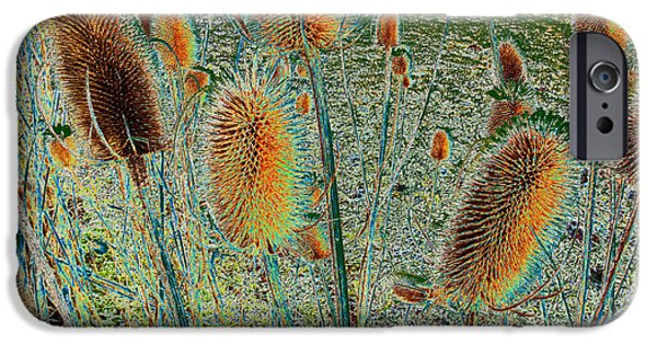 Thistle iPhone Cases - Thistle iPhone Case by Heiko Koehrer-Wagner
