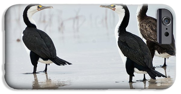 IPhone 6 Case featuring the photograph Three Cormorants by Werner Padarin