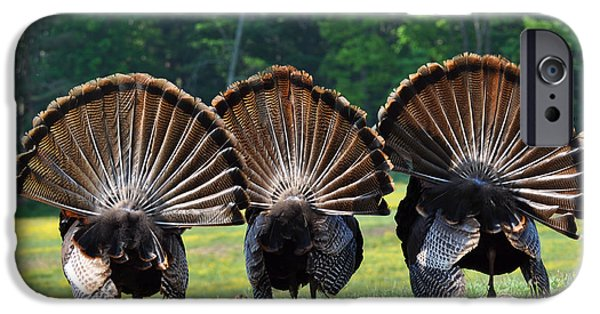 Eastern Wild Turkey iPhone Cases - Three Fans iPhone Case by Todd Hostetter
