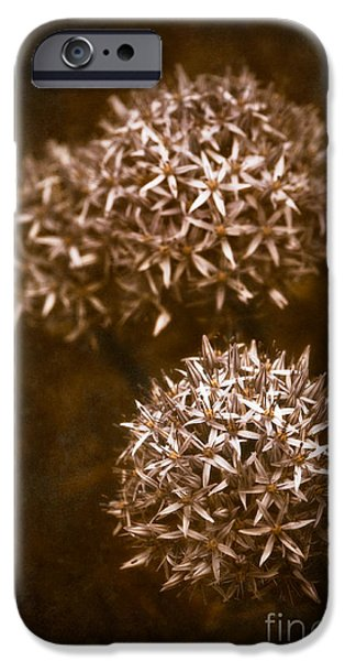 Alliums iPhone Cases - Three Globes iPhone Case by Venetta Archer