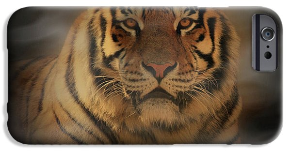 Wild Animals iPhone Cases - Tiger iPhone Case by Sandy Keeton