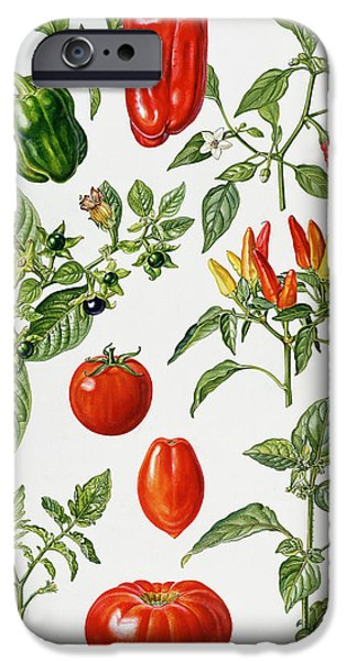 Chilli iPhone Cases - Tomatoes and related vegetables iPhone Case by Elizabeth Rice