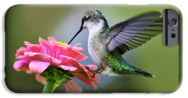 Tranquil Joy Hummingbird Square IPhone 6 Case