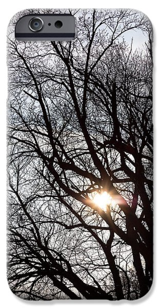 IPhone 6 Case featuring the photograph Tree With A Heart by James BO Insogna