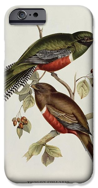 Lovebird iPhone Cases - Trogon Collaris iPhone Case by John Gould