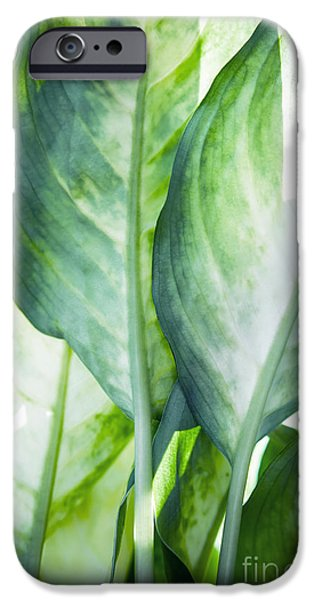Dissing iPhone 6 Case - Tropic Abstract  by Mark Ashkenazi