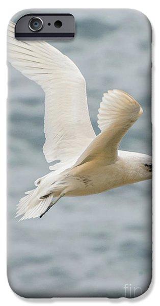 Tropic Bird 2 IPhone 6 Case by Werner Padarin