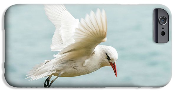Tropic Bird 4 IPhone 6 Case