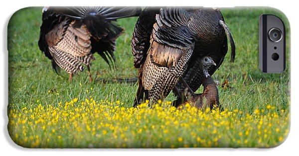 Eastern Wild Turkey iPhone Cases - Turkey Love iPhone Case by Todd Hostetter