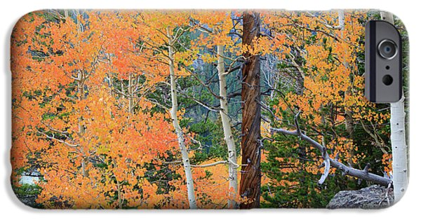 Twisted Pine IPhone 6 Case by David Chandler
