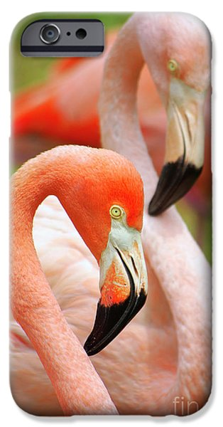 Everglades iPhone Cases - Two Flamingoes iPhone Case by Carlos Caetano