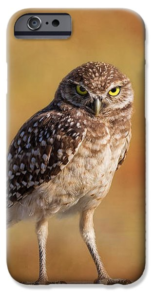 Birds iPhone Cases - Under A Watchful Eye iPhone Case by Kim Hojnacki