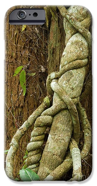 IPhone 6 Case featuring the photograph Vine by Werner Padarin