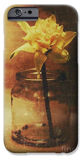 Vintage Daffodil Flower Art IPhone 6 Case