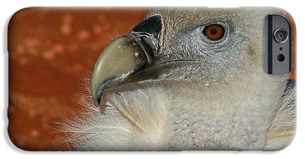 Vulture iPhone Cases - Vulture Portrait iPhone Case by Ernie Echols