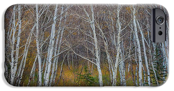 IPhone 6 Case featuring the photograph Walk In The Woods by James BO Insogna