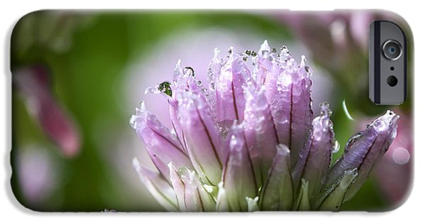 Floral Photographs iPhone Cases - Water droplets on chives flowers iPhone Case by Teresa Zieba
