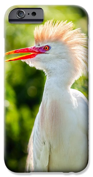 Cattle Egret iPhone Cases - Wearing His Colors iPhone Case by Christopher Holmes