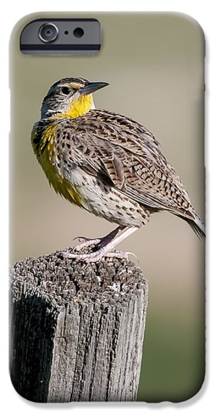 IPhone 6 Case featuring the photograph Western Meadowlark by Gary Lengyel