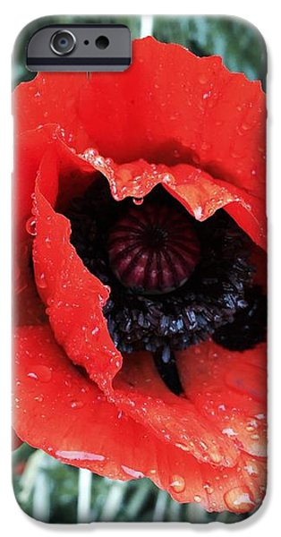 iPhone 6 Case - Wet Poppy by Orphelia Aristal