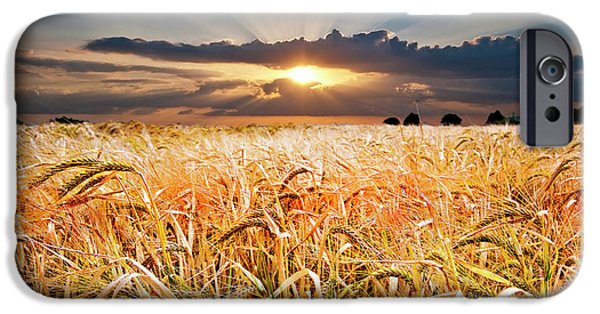 Spectacular iPhone Cases - Wheat At Sunset iPhone Case by Meirion Matthias