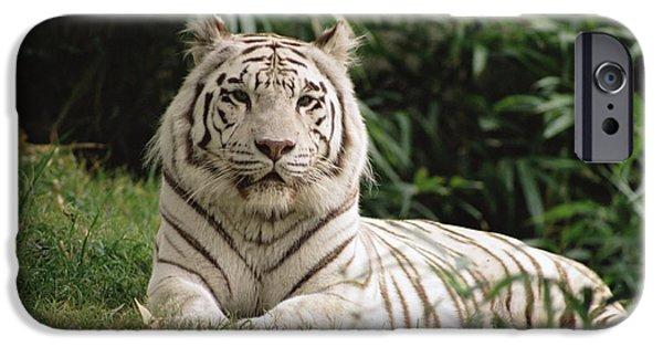 Felidae iPhone Cases - White Bengal Tiger Panthera Tigris iPhone Case by Gerry Ellis
