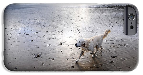 Dog Walking iPhone Cases - White Dog iPhone Case by Svetlana Sewell