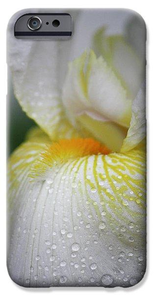 White Beard iPhone Cases - White Iris Study No 7 iPhone Case by Teresa Mucha
