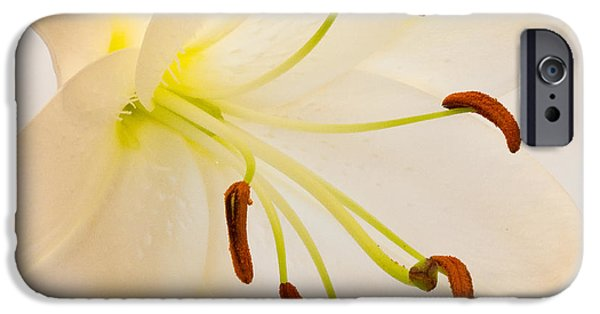 Asiatic Lily iPhone Cases - White Lily Square Version iPhone Case by Bill Swindaman