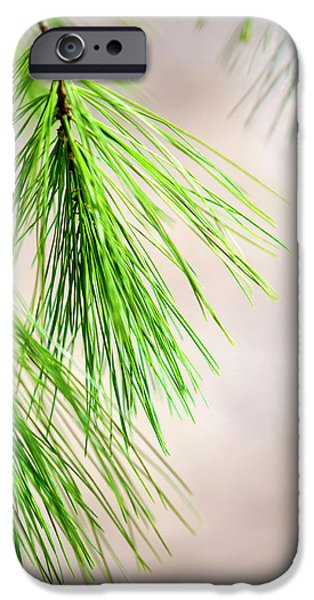IPhone 6 Case featuring the photograph White Pine Branch by Christina Rollo