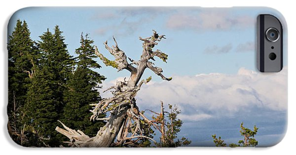 Interior Scene iPhone Cases - Whitebark Pine at Crater Lakes rim - Oregon iPhone Case by Christine Till