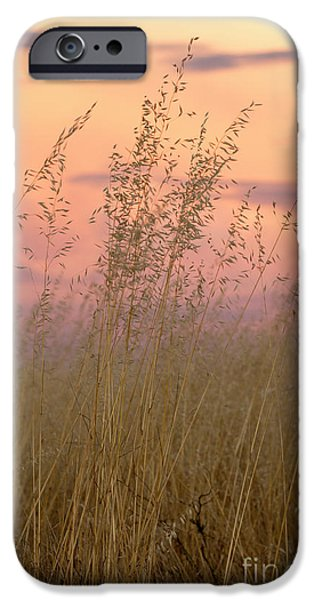 IPhone 6 Case featuring the photograph Wild Oats by Linda Lees