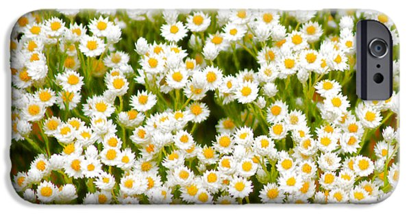 iPhone 6 Case - Wildflowers by Holly Kempe