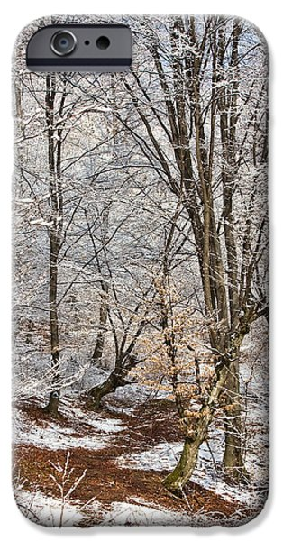 Wintertime iPhone Cases - Winter forest iPhone Case by Gabriela Insuratelu