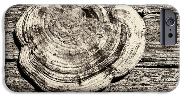 IPhone 6 Case featuring the photograph Wood Decay Fungi, Nagzira, 2011 by Hitendra SINKAR